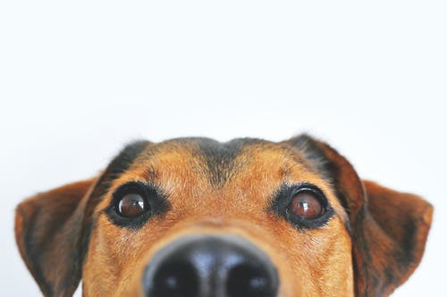Help, wat is er loos met het oor van mijn hond?